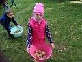 Święto Pieczonego Ziemniaka z MDK Puławy